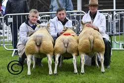 Great Yorkshire Show 2017